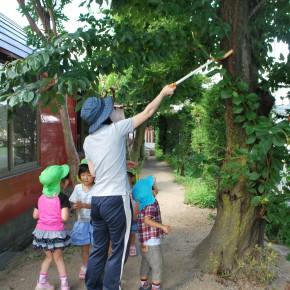 夏休み希望保育実施中!